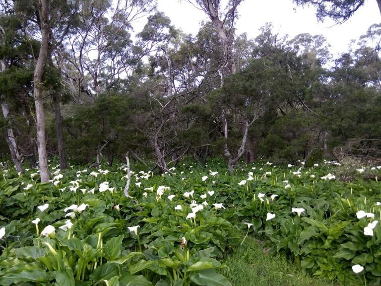 Ludlow Stuart Forest