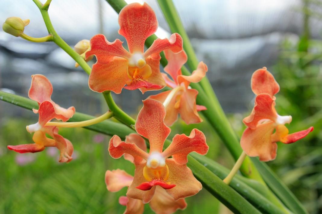 Ferme à orchidées